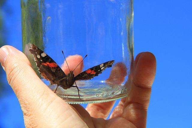 butterfly-761637_640